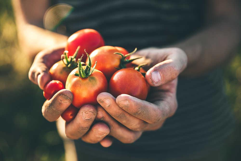 El tomate, un alimento típico español lleno de beneficios para nuestra salud